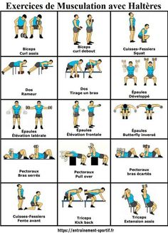 Strength Training with Dumbbells and Free Weights – 15 Exercises – fitness training Race Training, Training Programs, Strength Training, Workout Programs, Circuit Training, Yoga Routine, Health Routine, Workout Routines, Sport Motivation