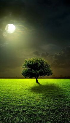 Lonely Tree In Moonlight.