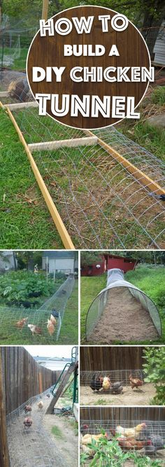 DIY Chicken Tunnel Can Let You Watch the Birds Roam Freely WIthout Destroying the Garden Flower Beds!A DIY Chicken Tunnel Can Let You Watch the Birds Roam Freely WIthout Destroying the Garden Flower Beds! Diy Garden Furniture, Diy Garden Decor, Furniture Ideas, Chicken Tunnels, Landscaping Around House, Diy Chicken Coop, Chicken Ideas, Chicken Runs, Hobby Farms