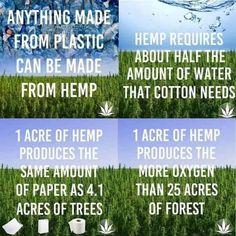 Hemp .......the other cotton! #TextileWaste #Upcycle #Recycle #DIY #GreenLiving #Handmade #DIY #Craft #Hemp Clean Eating, Food Porn, Marijuana Plants, Vegan, Hemp Oil, Go Green, Sustainable Living, Amazing Gardens