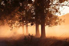 (treescape in Romania)