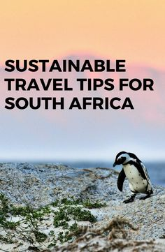 Check out these tips on how to reduce your carbon foorprint while travelling in this beautiful African country. African Countries, Going On Holiday, Where To Go, Sustainability, South Africa, Travelling, Travel Tips, Country, Check