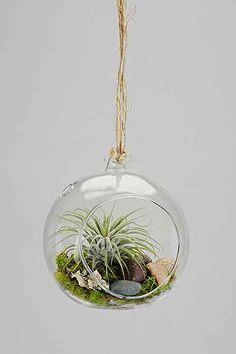 DIY Hanging Air Plant Terrarium Kit