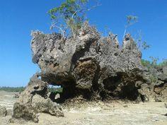 Coral rock in #Fukuchani.