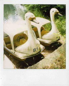 my favorite swan boats Paddle Boat, Swan Lake, Swans, So Little Time, Kitsch, Carousel, Transportation, Heaven, Night