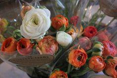 #ranunculus bunches #fiveforkfarms #slowflowers #fieldtovase #MAgrown #shoplocal