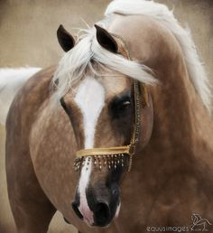 this horse is really pretty