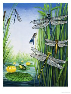 The Pond Patrol. Various types of dragonfly. From the Look and Learn Eighth Book of the Wonders of Nature Date Framed Print Framed, Poster, Canvas Prints, Puzzles, Photo Gifts and Wall Art Poster Prints, Framed Prints, Canvas Prints, Types Of Dragonflies, Dragonfly Wall Art, Dragonfly Wings, Animal Drawings, Find Art, Giclee Print