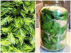 A fenyőrügyeket májusban kell szedni, amikor kb. 3-5 cm-esek és még világos zöldek, olyan helyről, ahol nem éri őket szennyeződés. A fenyőr... Spice Mixes, Vinaigrette, Preserves, Celery, Pickles, Herbalism, Mason Jars, Juice, Food And Drink