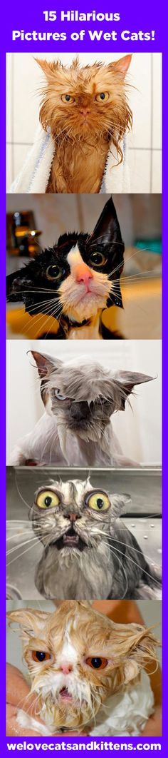 15 Funny pictures of cats that have gotten a little damp. Some look grumpy but none were hurt!