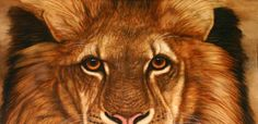 Eyes of the Lion - Animal Art