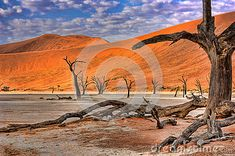 Photo about Dead tree in Dead Vlei - Sossusvlei, Namib Desert, Namibia. Image of landscape, africa, sand - 25559699 Namib Desert, Landscaping Images, Mount Rushmore, Royalty, Africa, Mountains, Landscape, Nature, Travel