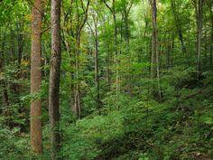 Cove (Appalachian Mountains) - Wikipedia, the free encyclopedia