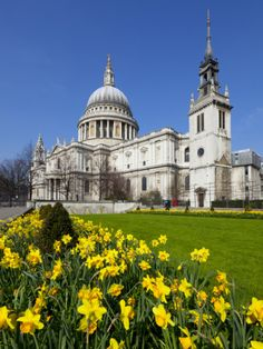 St. Paul's Cathedral with Daffodils, London, England, United Kingdom, Europe Photographic Print by Stuart Black