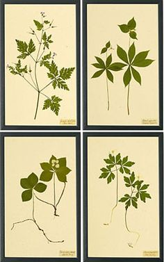 free botanical prints | Botanical Prints II | Prints and Graphics | Shaker Workshops