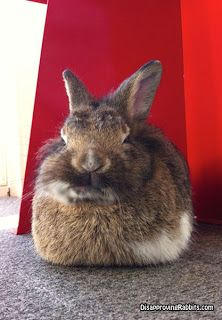 Disapproving Rabbits: Sebastian.  The only LinkedIn connection I want to make is my foot with your face.