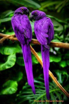 Beautiful Purple Birds                                                                                                                                                      Más