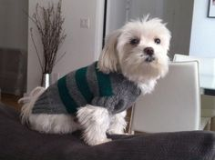 Dillon modeling a wool hand-knit grey sweater with green stripes.  Designed and knit by Naomi.