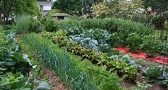 Free Vegetable Garden Layout, Plans and Planting Guides - garten-ideen Indoor Vegetable Gardening, Vegetable Garden Design, Organic Gardening, Gardening Vegetables, Indoor Garden, Gardening For Beginners, Gardening Tips, Growing Tomatoes In Containers, Fall Vegetables