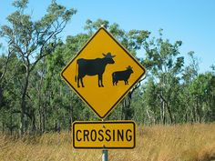 Somebody had too much time on their hands and painted hats on the cow and sheep signs on the road to Cooktown.