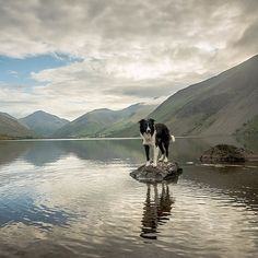 Paddy the Border Collie knows how to outshine even the best views. You can have…