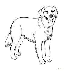 Labrador Retriever Coloring Page