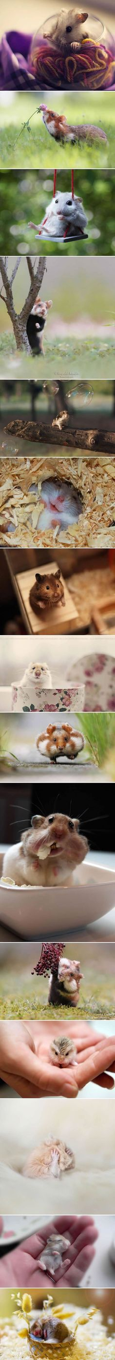 Adorable hamsters