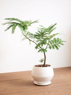 エバーフレッシュ http://www.tree-tree.jp/?pid=45848823
