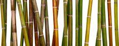 Fotobehang Bamboe - Nikkel-Art.nl