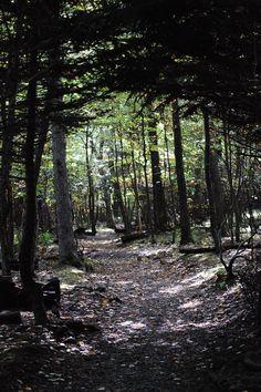 Fairy Tale Forest ( Appalachian Trail, Virginia) Fairy Tale Forest, Tree Forest, Nature Pictures, Cool Pictures, Beautiful Pictures, Appalachian Mountains, Appalachian Trail, Virginia Waterfalls, Hiking In Virginia