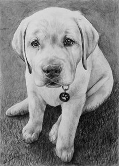 Graphite drawing of Lucy