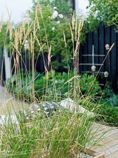 Del opp hagen med prydgress - Prydgresset deler terrassen i to rom - et for soling og avslapning, og et for spising og hygge rundt bordet. I motsetning til stauder, som bruker tid på å vokse seg store, er prydgress rasktvoksende og fyller godt