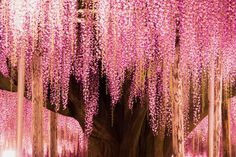Superb Nature - Great Wisteria Tree by kawauso_neko. Garden Spells, Wisteria Tree, Landscaping Plants, Mother Nature, Planting Flowers, Liberty, Wings, Inspiration, Beautiful