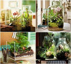 DIY - Jak zrobić ogród-terrarium? Terrarium, Jar, Nature, Plants, Home Decor, Google, Blog, Ideas, Glass Art