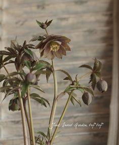 ガーデニング園芸の花苗通販サイト。豊富な種類の花苗・葉もの・リーフ・最新品種・土・鉢やテラコッタなどの販売。ネット通販。おしゃれな寄せ植えの植え方。Junk sweet Garden tef*tef*