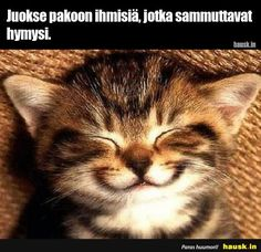 Juokse pakoon ihmisiä, jotka sammuttavat hymysi. Funny Animal Memes, Cute Funny Animals, Funny Animal Pictures, Cute Baby Animals, Cat Memes, Funny Cute, Cute Pictures, Smiling Animals, Humorous Animals