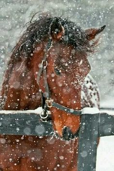 Horses in the snow!