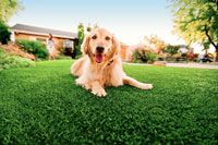 Safe Artificial Dog Grass designed for dogs by a pet product company. Looks and Feels Like Real Grass.Our doggie grass Safely satisfy's. Non-Toxic, Insta. Artificial Grass For Dogs, Artificial Turf, Fake Grass, Backyard Dog Area, Backyard Ideas, Garden Ideas, Indoor Dog Potty, Porch Potty, Pet Grass