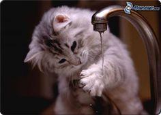 Chat et robinet