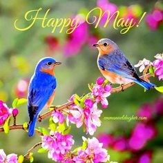 Ideas blue bird photography spring for 2019 Two Birds, Wild Birds, Pretty Birds, Beautiful Birds, Pictures Images, Photos, Spring Wallpaper, Nature Wallpaper, Hd Wallpaper