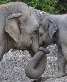 Wild baby animals ~ Stunning nature Best Picture For Cute animals real For Your Taste You are looking for something, Cute Baby Animals, Animals And Pets, Funny Animals, Mother And Baby Animals, Mother And Baby Elephant, Smiling Animals, Nature Animals, Animals With Their Babies, Wild Life Animals