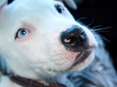 COLUMN: Let's stop calling them 'pit bull' attacks