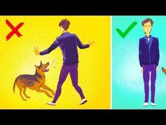 Como Sobreviver a Um Ataque de Cachorro - YouTube