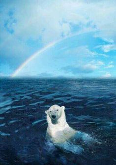 Found on twitter Polar bear having fun under rainbow