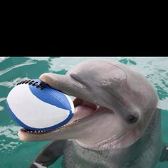 Play football with a dolphin