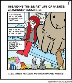 This story line is based on actual events. Rabbit Toys, Bunny Rabbit, Dutch Rabbit, Big Bunny, Fluffy Bunny, Secret Life Of Rabbits, Secret Life Of Pets, Daily Bunny, Rabbit Life