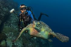 COCOS ISLAND, COSTA RICA - Marine biologist and National Geographic Explorer-in-Residence Enric Sala dives with a green turtle off Cocos Island, Costa Rica. Sala leads National Geographic's Pristine Seas project, that aims to find, survey and help protect the last healthy and undisturbed places in the ocean. (Photo by Octavio Aburto) #