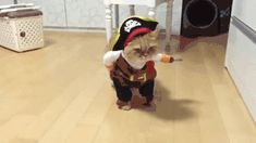 New trending GIF tagged cat halloween costume pirate via...