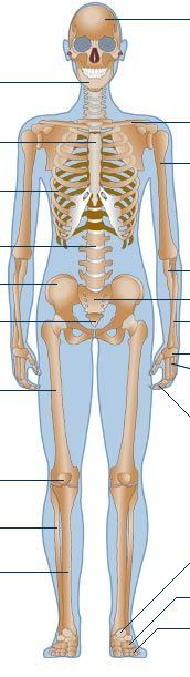 Here is a great website from the BBC (a trusted source!) to help us with anatomy and physiology