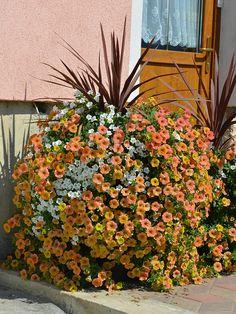 Modne balkonske zasaditve za leto 2016 - Zeleni svet Indian Summer, Window Boxes, Hanging Baskets, Petunias, Container Gardening, Plants, Fall Hanging Baskets, Plant, Flower Boxes